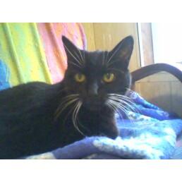 Beautiful Salem Louise  1997-2010