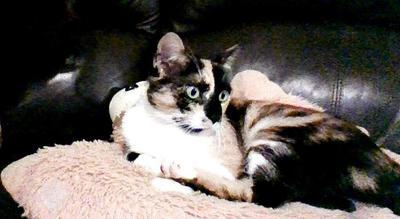 Mina our rescue cat