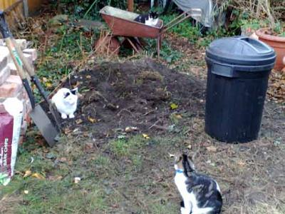 A Garden Full OF Cats
