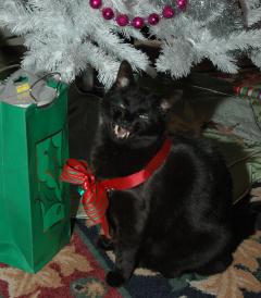 Brujah the Cat