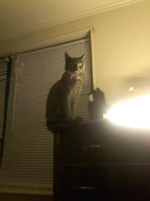 Shadow my cat