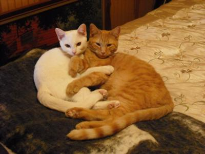 The female cat  is white, the male cat is orange.