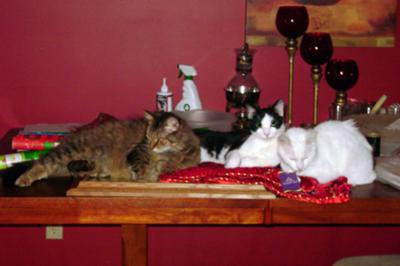 from left to right: Pancho, Shamrock, and Nikko the cat in question :)