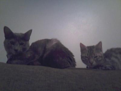 My two cats Daisy and Zippy