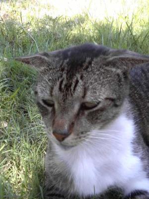 Tom Tom our cat