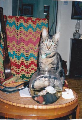 Katie the cat