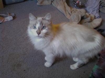Cleo in 2008