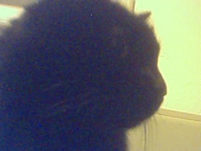prince watching moniter hes always helping me at comp.hehe