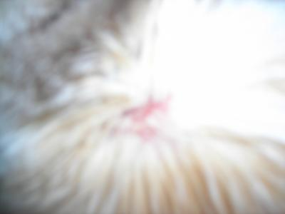 Cat Skin under Fur at Neck