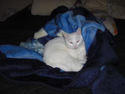 my kitty shuggar