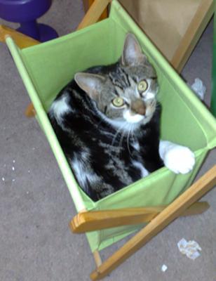 Cat In The Bin