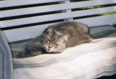 Smokey our cat relaxing in the swing