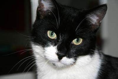 Byron the innocent cat