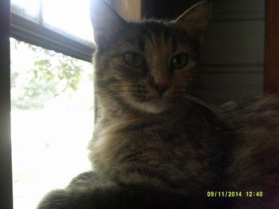 Tigerlilly my cat