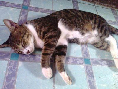 still sleeping cat